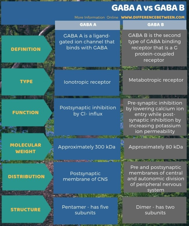 Difference Between GABA A and GABA B in Tabular Form