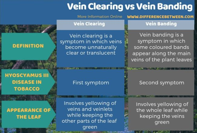Difference Between Vein Clearing and Vein Banding in Tabular Form