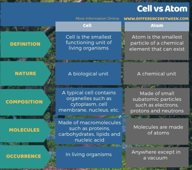 Difference Between Cell and Atom in Tabular Form