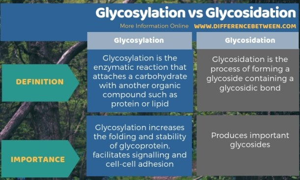Difference Between Glycosylation and Glycosidation - Tabular Form