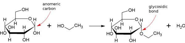 Main Difference - Glycosylation vs Glycosidation