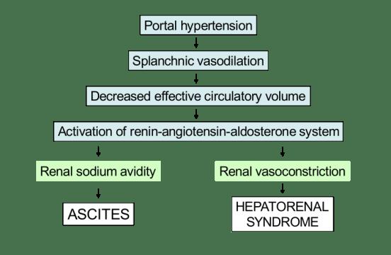 Key Difference - Pathophysiology vs Pathogenesis