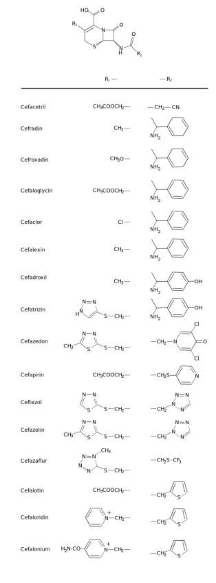 Difference Between Penicillin and Cephalosporin