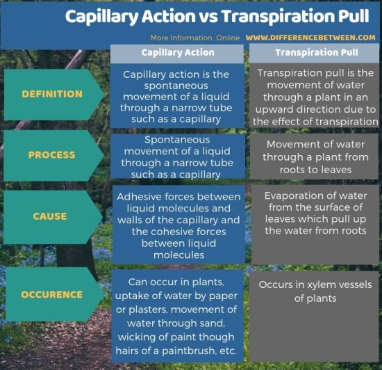 Difference Between Capillary Action and Transpiration Pull in Tabular Form