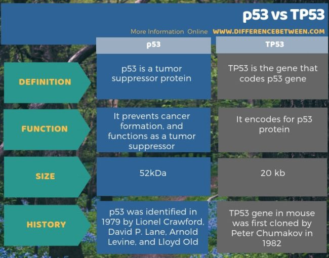 Difference Between p53 and TP53 in Tabular Form