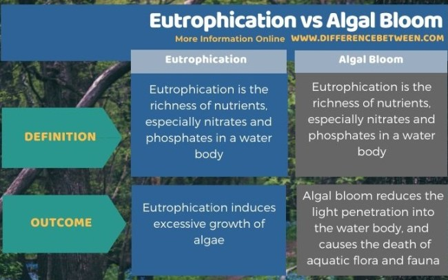 Difference Between Eutrophication and Algal Bloom in Tabular Form