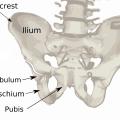 Difference Between Ilium and Ileum