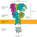Difference Between AMPA and NMDA Receptors