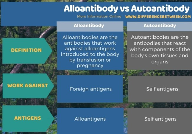 Difference Between Alloantibody and Autoantibody in Tabular Form