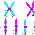Difference Between Crossover Frequency and Recombination Frequency