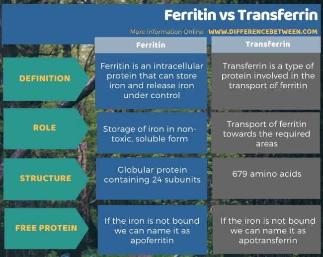 Difference Between Ferritin and Transferrin in Tabular Form