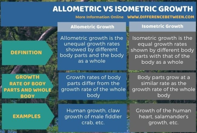Difference Between Allometric and Isometric Growth in Tabular Form