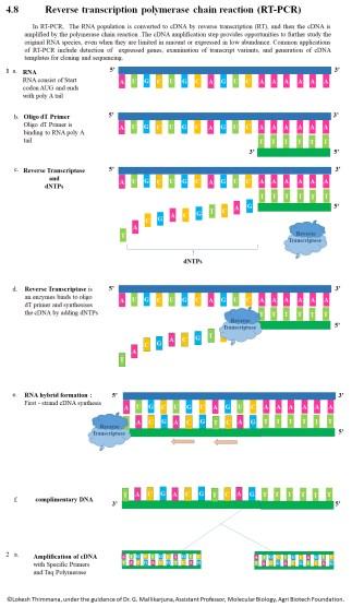 Key Difference - Random Primers vs Oligo dT