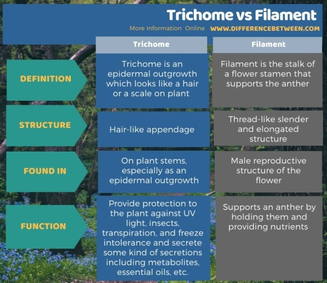 Difference Between Trichome and Filament in Tabular Form