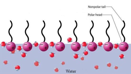 Key Difference - Anionic Cationic vs Nonionic Surfactants