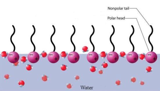 Learn How Surfactants Work