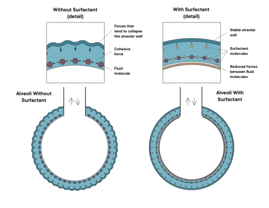Difference Between Anionic Cationic and Nonionic Surfactants