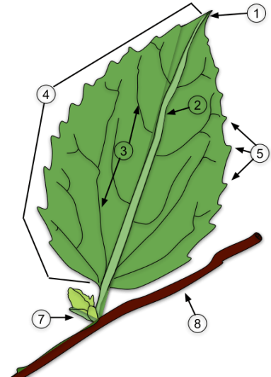 Key Difference - Variegated Leaves vs Simple Leaves