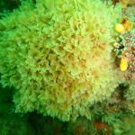 Difference Between Bryozoans and Corals