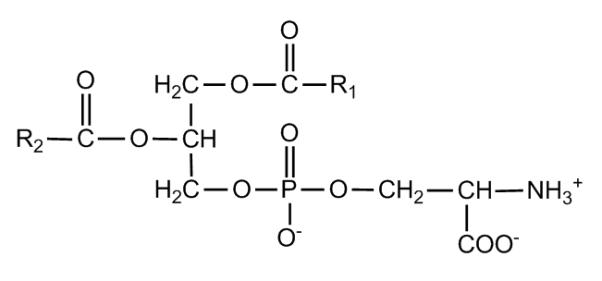 Key Difference - L-serine vs Phosphatidylserine
