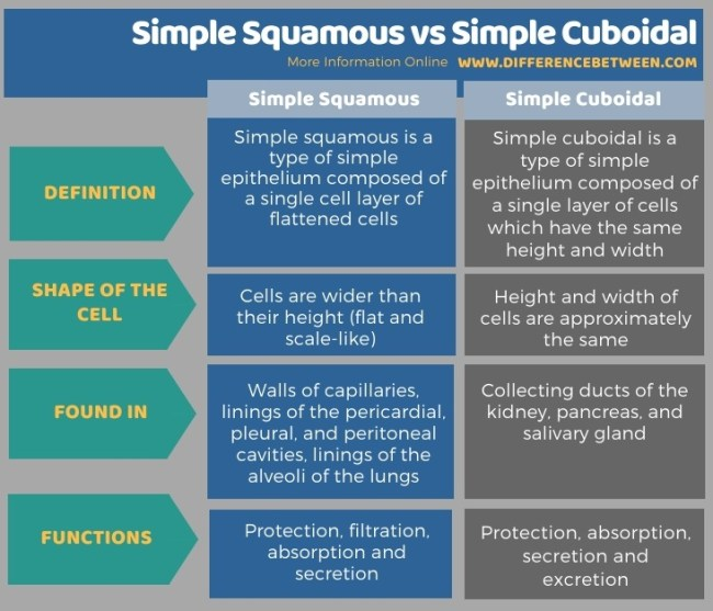 Difference Between Simple Squamous and Simple Cuboidal in Tabular Form