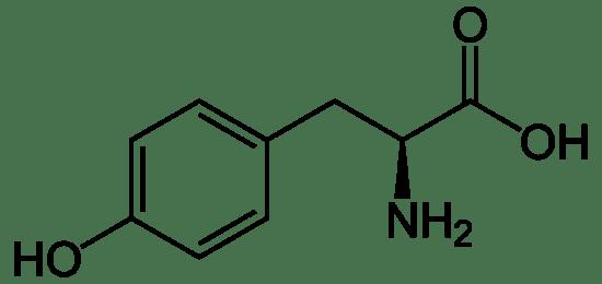 Key Difference - Phenylalanine vs Tyrosine