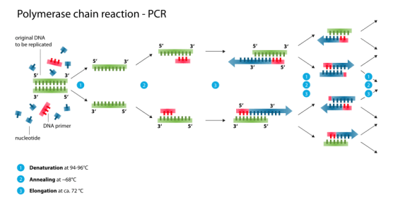 Difference Between Consensus PCR and Pan PCR