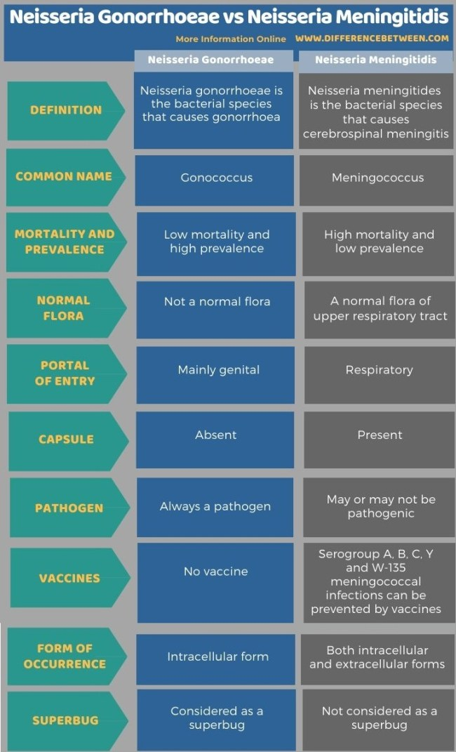 Difference Between Neisseria Gonorrhoeae and Neisseria Meningitidis in Tabular Form