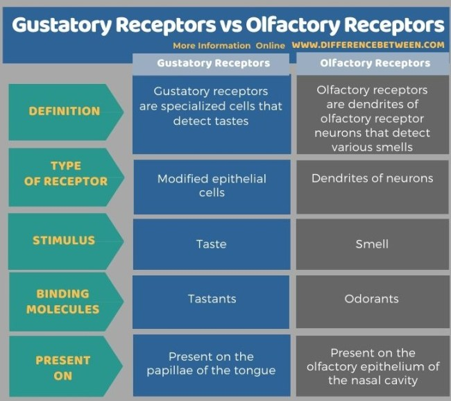 Difference Between Gustatory Receptors and Olfactory Receptors in Tabular Form