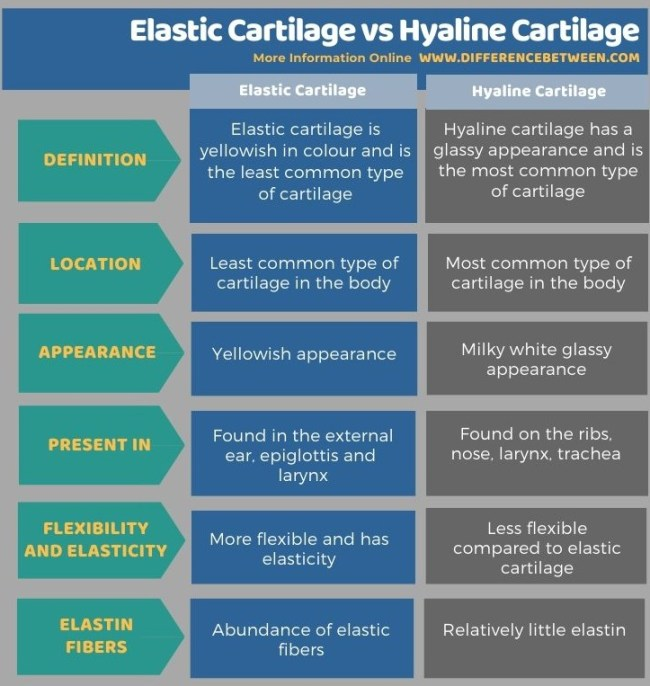 Difference Between Elastic Cartilage and Hyaline Cartilage in Tabular Form