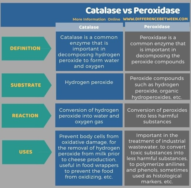 Difference Between Catalase and Peroxidase in Tabular Form