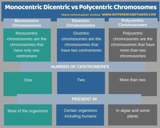 Difference Between Monocentric Dicentric and Polycentric Chromosomes - Tabular Form
