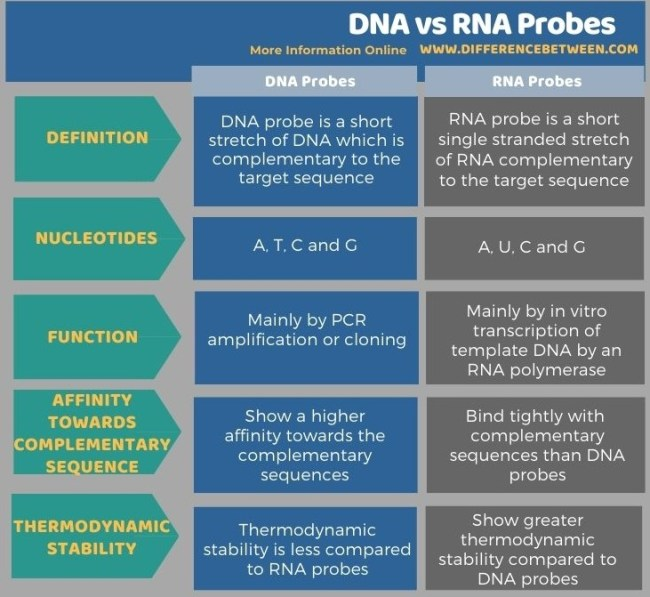 Difference Between DNA and RNA Probes in Tabular Form