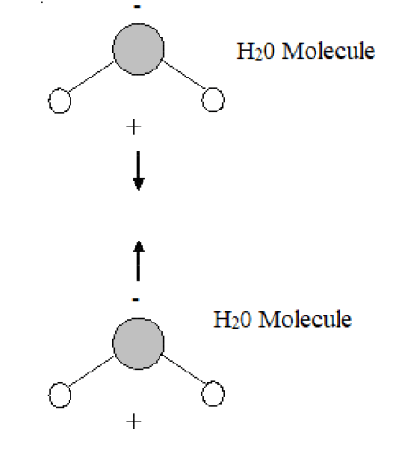 Key Difference - Van der Waals vs Hydrophobic Interactions