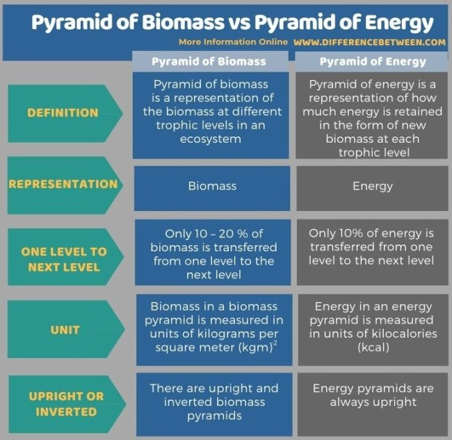 Difference Between Pyramid of Biomass and Pyramid of Energy in Tabular Form