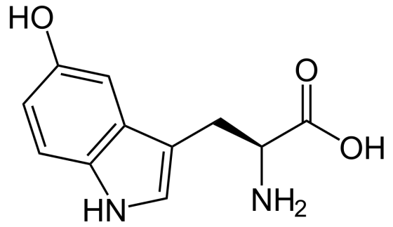 Difference Between 5 HTP Tryptophan and L-Tryptophan