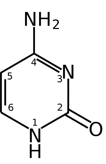 Difference Between Cytosine and Cysteine
