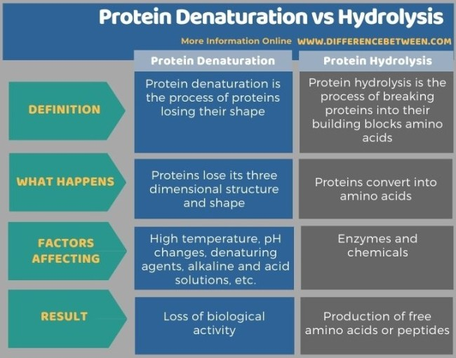 Difference Between Protein Denaturation and Hydrolysis in Tabular Form