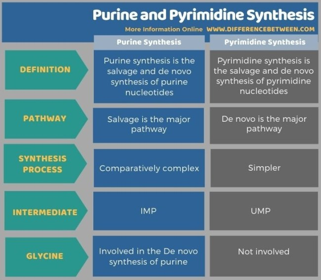 Difference Between Purine and Pyrimidine Synthesis in Tabular Form