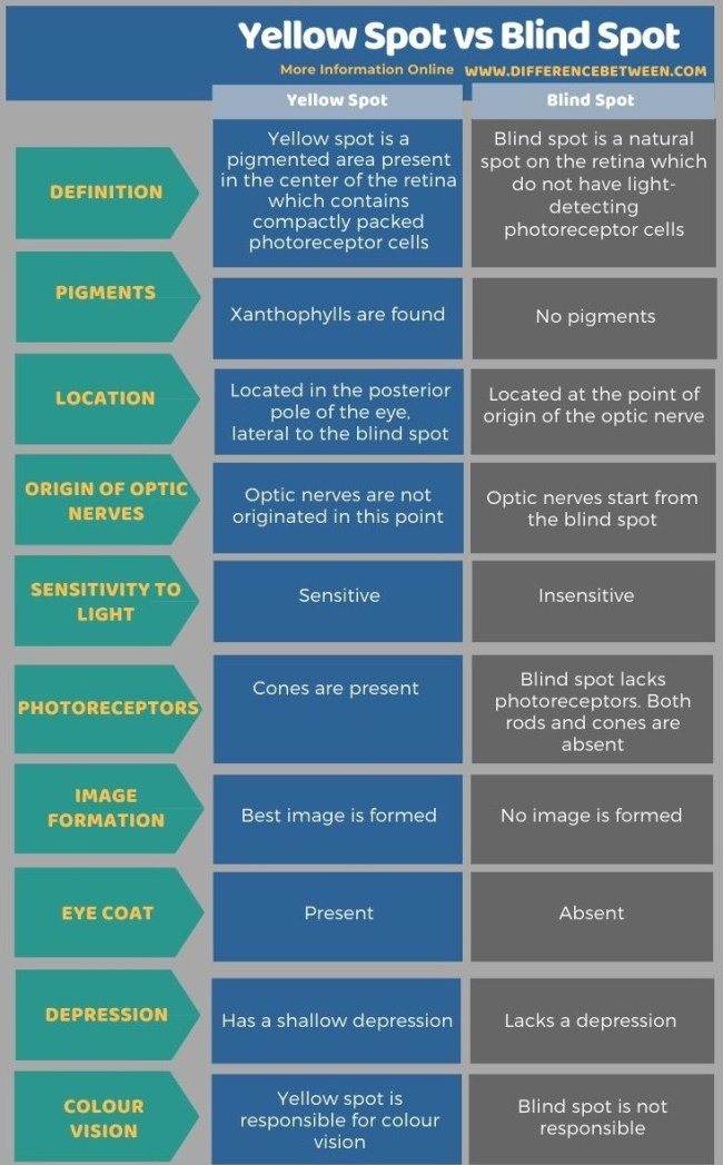 Difference Between Yellow Spot and Blind Spot in Tabular Form