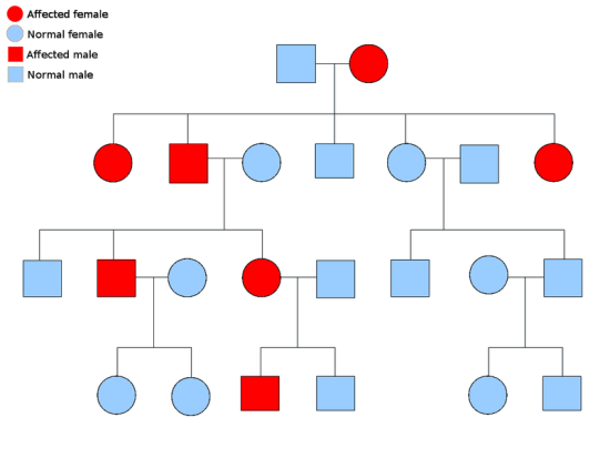 Difference Between Autosomal Dominant and Autosomal Recessive Disorders