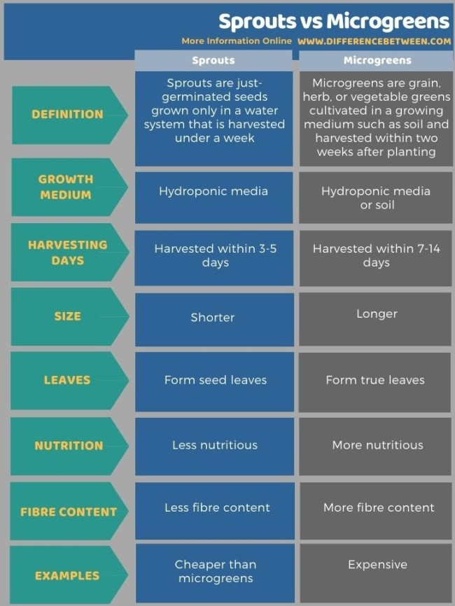 Difference Between Sprouts and Microgreens in Tabular Form