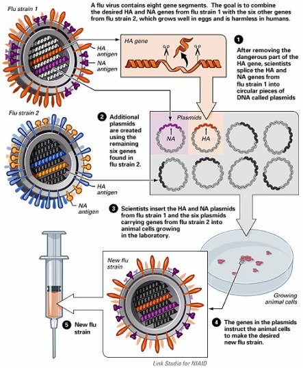 Difference Between Inactivated and Recombinant Flu Vaccine