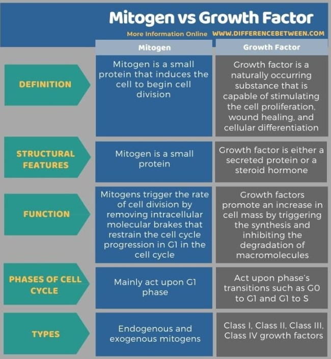 Difference Between Mitogen and Growth Factor in Tabular Form