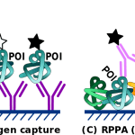 Difference Between DNA and Protein Microarray