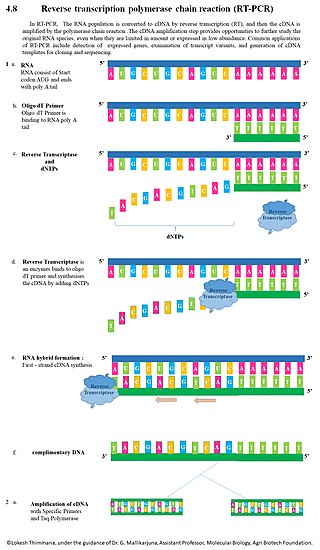 What is cDNA