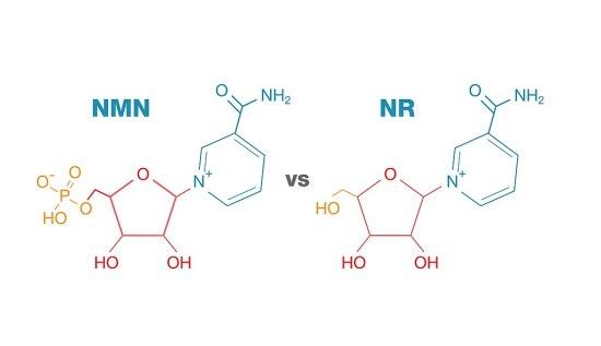 Nicotinamide Adenine Dinucleotide and Nicotinamide Riboside Differences