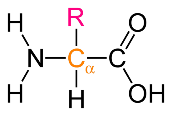 Alpha vs Beta Amino Acid