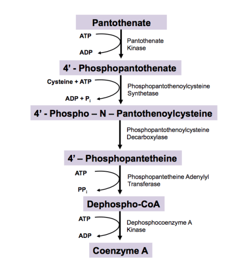 Biosynthetic Pathway and Degradative Pathway - Difference