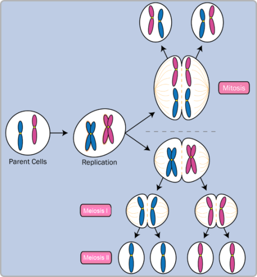 Prokaryotic vs Eukaryotic Cell Division